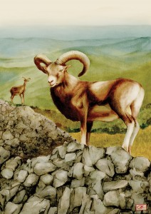 06b-Mouflon
